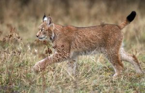Bieszczady - dom dzikich zwierząt